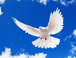 Dove for peace and love